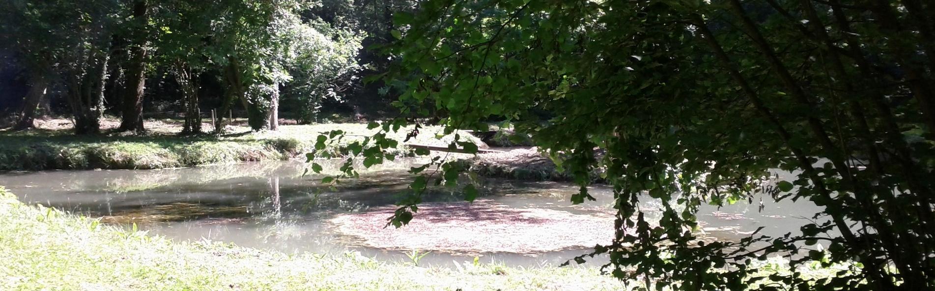 Aménagement de l'étang de Moussy au lieu-dit « La fontaine du Bellay »
